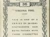 36b-virginia-pine